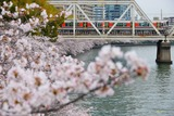 桜と323系