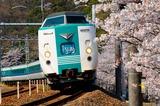 山中渓の桜と381系
