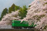 満開の桜と113系