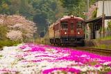 芝桜の岩滝口駅