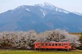 奥越の山々と桜