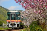 八重桜とキハ122