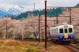 残雪の山々と保田の桜