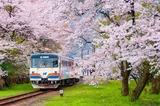 桜の谷汲口駅