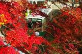 紅葉の宇多野