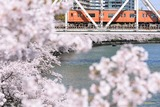 桜と103系