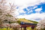 桜と「丹後の海」