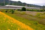初夏の吉井川橋梁