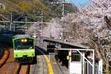 桜の河内堅上駅