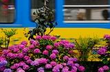 アジサイと阪堺電車