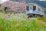 桜の尾奈駅