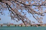 桜と5087レ