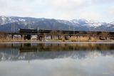 冬の貫川内湖と「トワ」