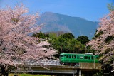桜と113系