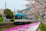 芝桜の岩滝口_1