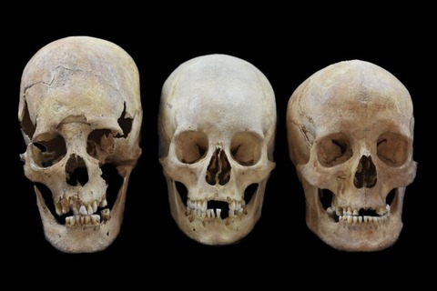 skulls-show-women-moved-across-medieval-europe-not-just-men