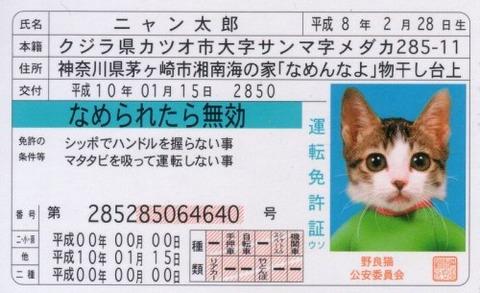 なめ猫 免許証