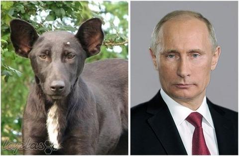 犬 プーチン  激似 似てる そっくり