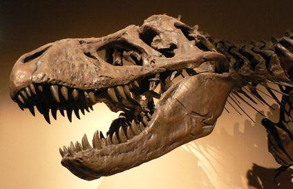 恐竜ティラノサウルスの化石