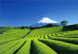 静岡 富士山