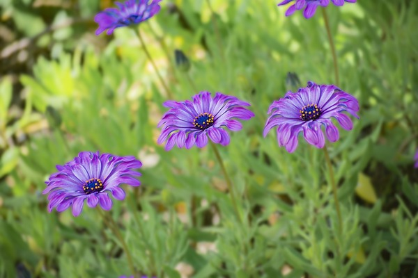 flowers-4893789_1920