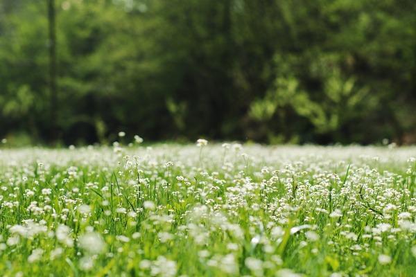 meadow-4568533_1920