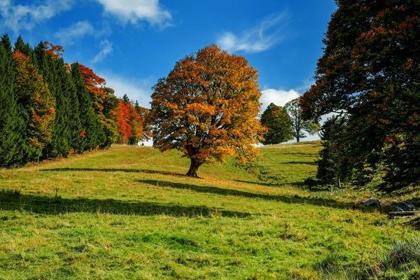 tree-3601248_1920
