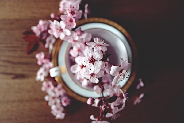 spring-2174750_1920