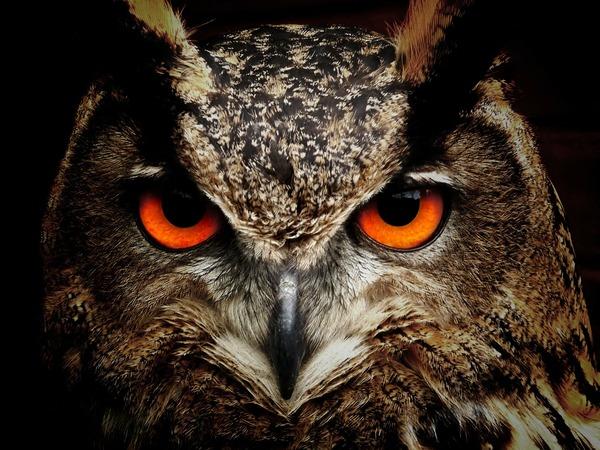 owl-50267_1920