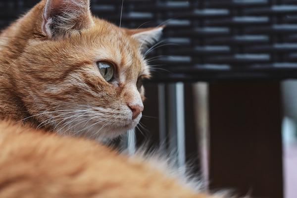 cat-5550033_1920