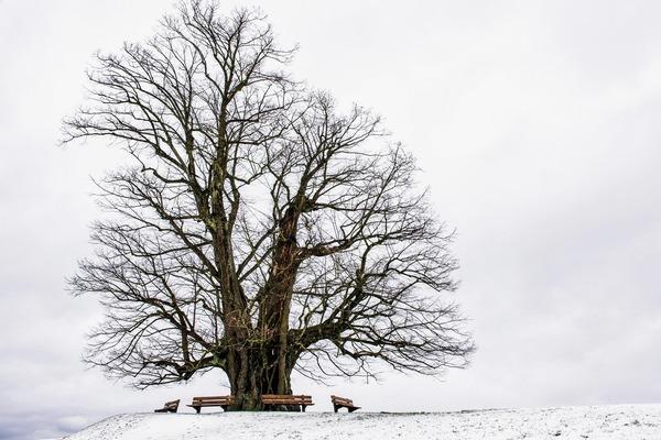 winter-5914653_1920