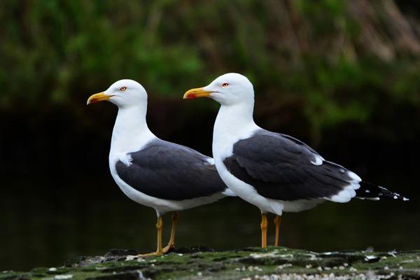 seagull-4346223_1920