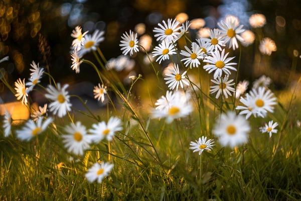 flowers-5479950_1920