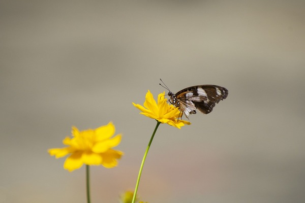butterfly-5544161_1920 (1)