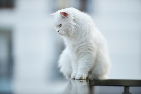 cat-5328304_1920