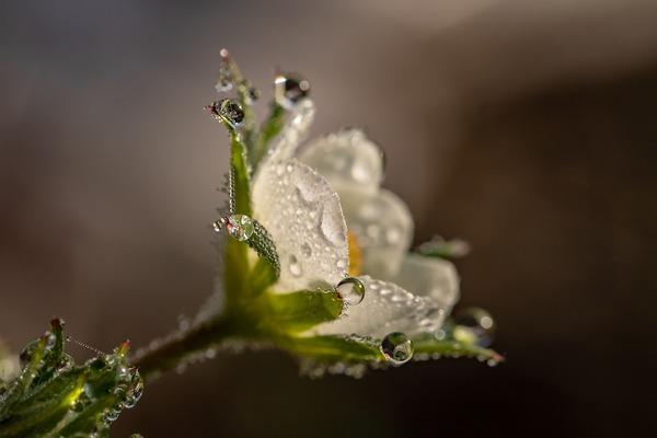 raindrop-3402550_1920