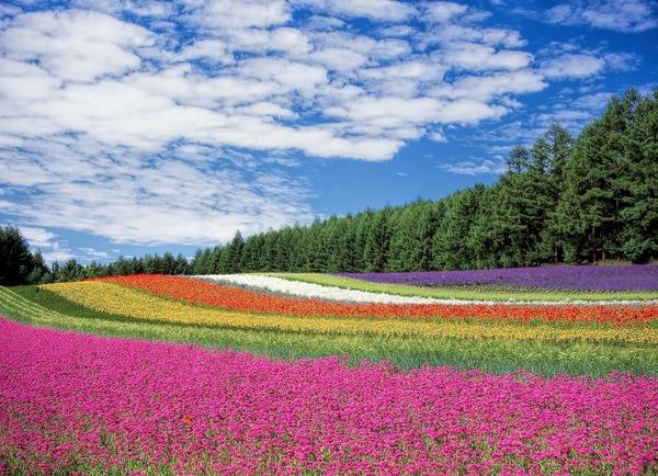 flower-field-250016_1920