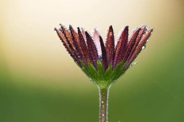 flower-6028389_1920