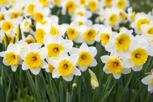 spring-flowers-5094462_1920