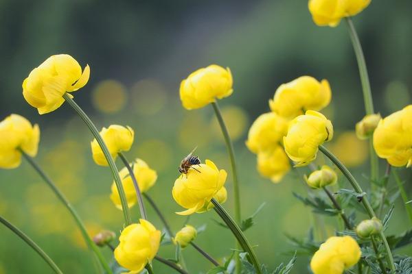 flower-6223380_1920