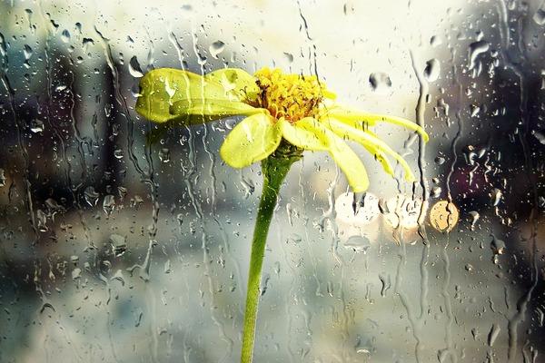 rain-68165_1920
