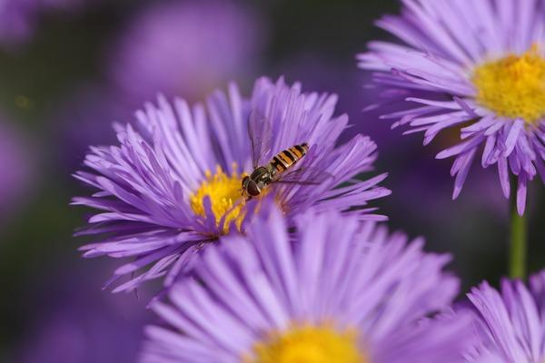 flower-6576831_1920