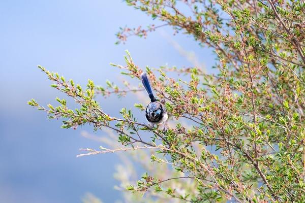 bird-6075839_1920