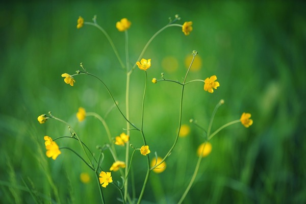 yellow-flowers-5207169_1920