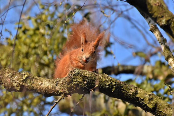 squirrel-5017538_1920