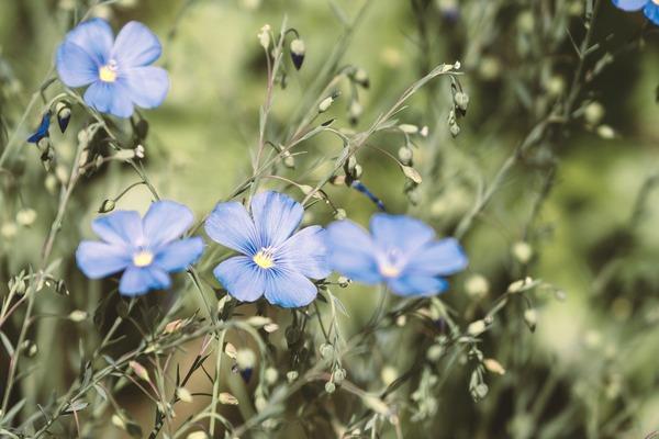 flower-5428541_1920