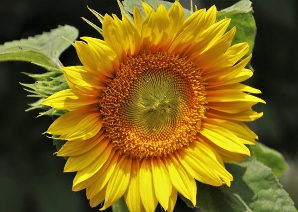 yellow-4340028_1920