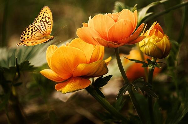 flowers-19830_1920