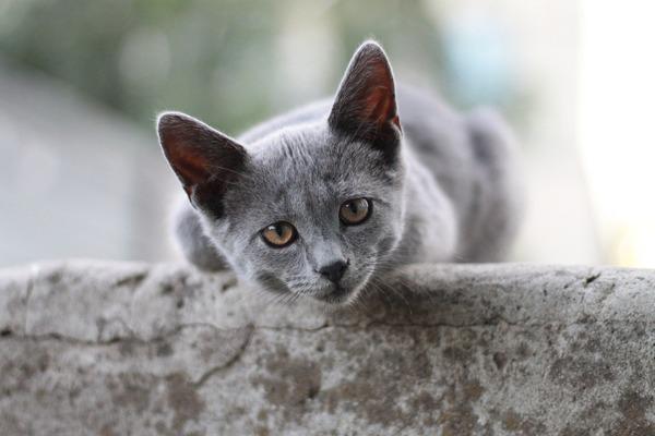cat-4756360_1920