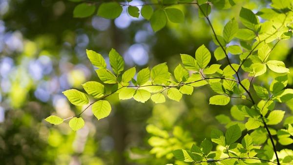 leaves-5340968_1920